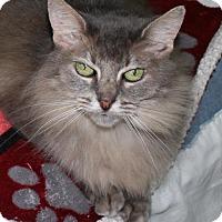 Adopt A Pet :: Dinah - Houston, TX