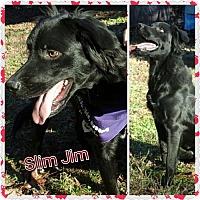 Adopt A Pet :: Slim Jim - Little Rock, AR