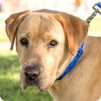 Adopt A Pet :: Remy - Wharton, TX
