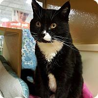 Adopt A Pet :: Toby - Bentonville, AR