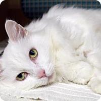 Adopt A Pet :: Blanca - Bellevue, WA