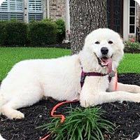 Adopt A Pet :: Boyd - Kyle, TX