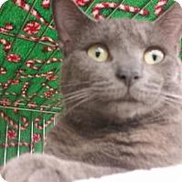 Adopt A Pet :: Shadow - Devon, PA