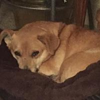 Adopt A Pet :: Rosalie - Polson, MT