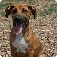 Adopt A Pet :: Charlie A31936040 - Westampton, NJ