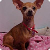 Adopt A Pet :: Radar - 7 lbs - Dahlgren, VA