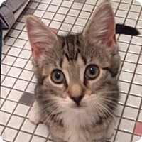 Adopt A Pet :: Nuzzle Beans - Long Beach, NY