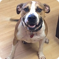 Adopt A Pet :: Deebo in CT - Manchester, CT