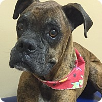 Adopt A Pet :: Oscar - Miami, FL