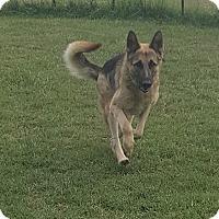 Adopt A Pet :: Canela - Mocksville, NC
