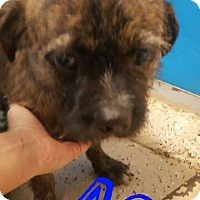 Adopt A Pet :: Ace - Mary Esther, FL