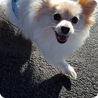 Adopt A Pet :: Mauja - Vancouver, WA