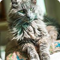 Adopt A Pet :: Shawna - St. Helena, CA