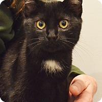 Adopt A Pet :: Freya - Lincoln, NE