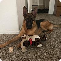Adopt A Pet :: King Jr - Phoenix, AZ