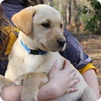 Adopt A Pet :: Major - Auburn, MA