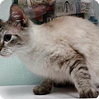 Adopt A Pet :: Kiki - Newberg, OR