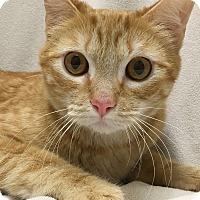 Adopt A Pet :: Garret - Watauga, TX