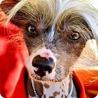 Adopt A Pet :: Joey in Texas - Lansing, MI