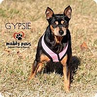 Adopt A Pet :: Gypsie - Council Bluffs, IA