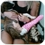 Photo 1 - American Pit Bull Terrier Puppy for adoption in Mesa, Arizona - Peanut