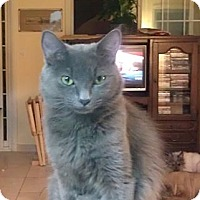 Adopt A Pet :: Queeny - Orlando, FL