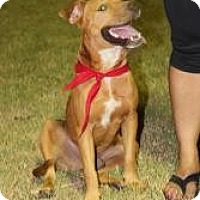 Adopt A Pet :: Stanley - Justin, TX