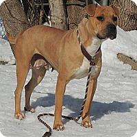 Adopt A Pet :: Penny - Trenton, NJ