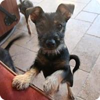 Adopt A Pet :: Callie - Loxahatchee, FL