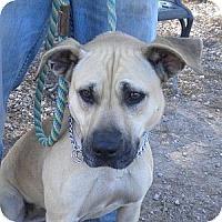 Adopt A Pet :: Kimmy - Athens, GA