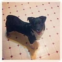 Adopt A Pet :: Ella - Louisville, KY
