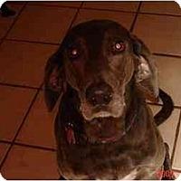 Adopt A Pet :: Izzy - Eustis, FL