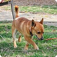 Adopt A Pet :: Taz - Homewood, AL