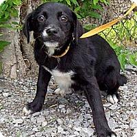 Adopt A Pet :: FLIRT/Summer Special Pricing - Glastonbury, CT