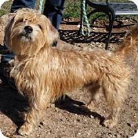 Adopt A Pet :: Hogan - Athens, GA