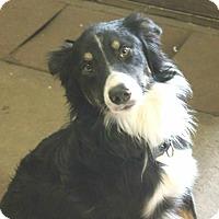 Adopt A Pet :: Thunder - Lebanon, CT