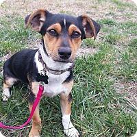Adopt A Pet :: Chase - Santa Ana, CA