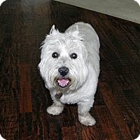 Adopt A Pet :: Beauty - Carrollton, TX