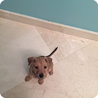 Adopt A Pet :: Otto - Davie, FL