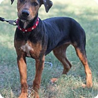 Adopt A Pet :: Elly May - Woodward, OK