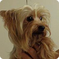 Adopt A Pet :: Bellamy - Crump, TN
