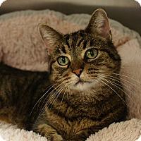 Adopt A Pet :: Weezer - Naperville, IL