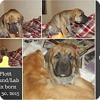 Adopt A Pet :: Bart Adoption pending - Manchester, CT