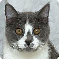 Adopt A Pet :: Peter N - Sacramento, CA