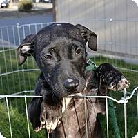 Adopt A Pet :: Mandy - Meridian, ID
