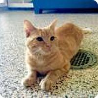 Adopt A Pet :: Butterball - Aiken, SC