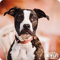 Adopt A Pet :: Ue' - Portland, OR