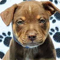 Adopt A Pet :: **JACSON** - Mukwonago, WI