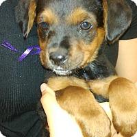 Adopt A Pet :: Portia - Thousand Oaks, CA