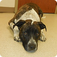 Adopt A Pet :: Fannie Mae - Whiting, IN